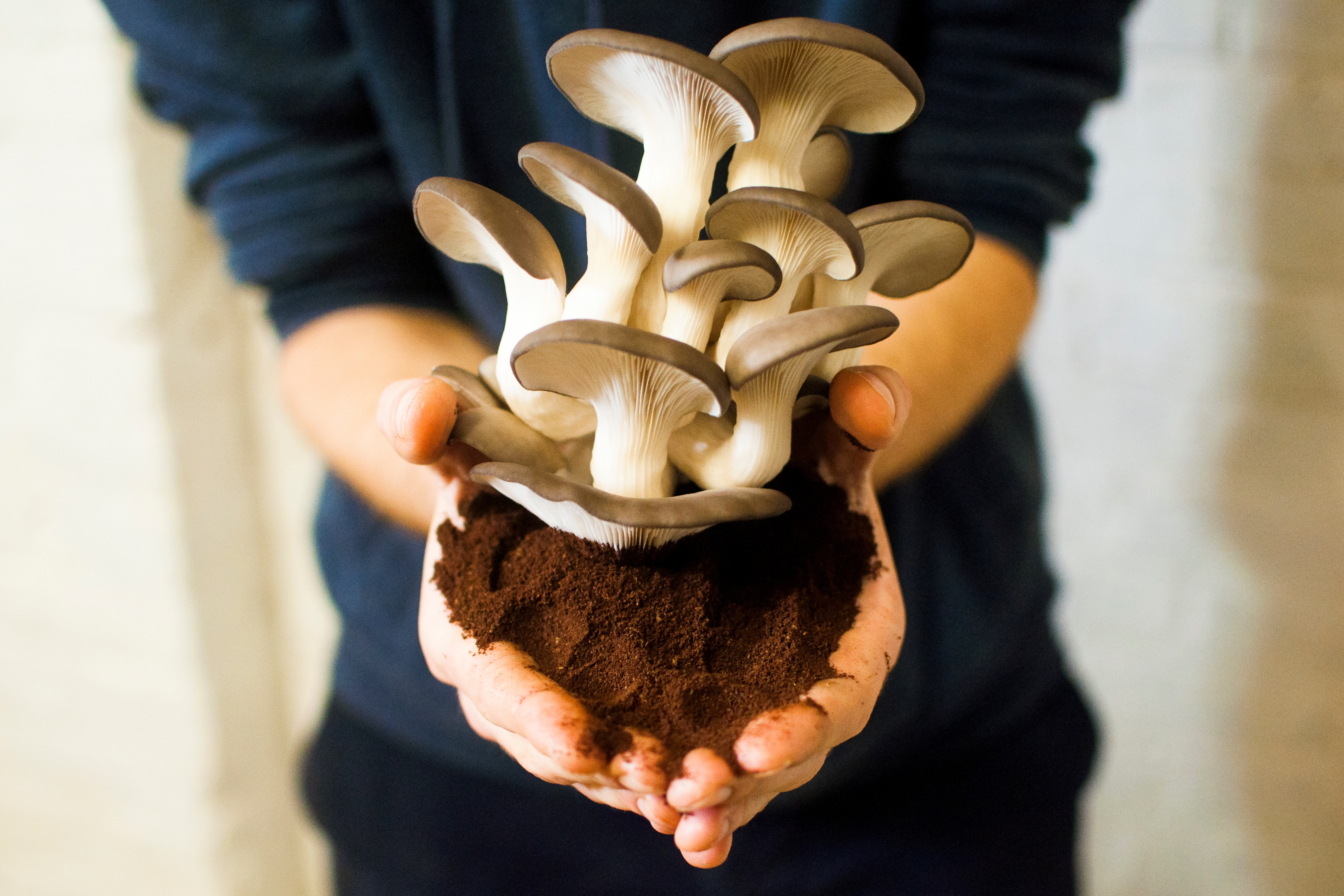 Lumifungi, création d'abat-jours à partir de mycélium